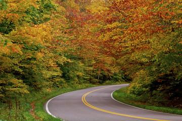 Road passing through autumn tree