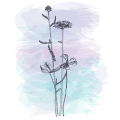 Background with drawing herbs and flowers