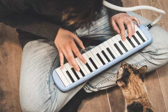 Someone is playing the melodica in horizontal position while a cat observes close to the keyboard.