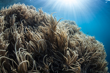 Sunlight Shines on Soft Corals in Blue Water