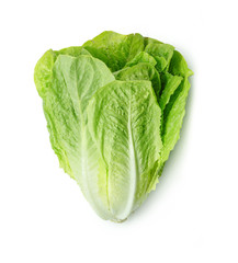Fresh Romain Lettuce isolated on white background.