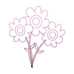 Beautiful flowers cartoon on purple lines vector illustration