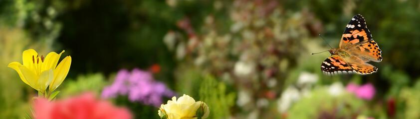 Schmetterling 425