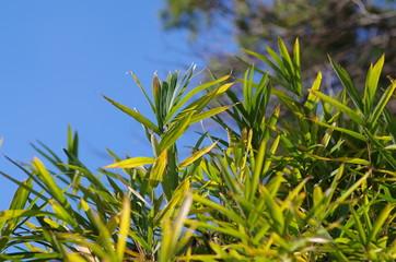 笹の葉と空