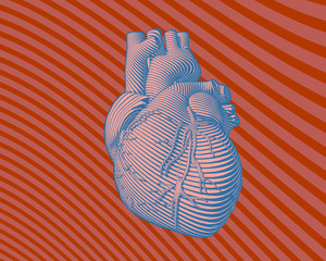 Colorful human heart stylized graphic illustration
