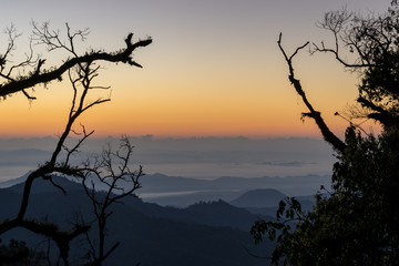 silhouette of dry branch tree on hill in scenic of sunrise sky