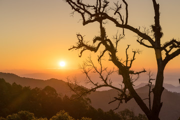 scenic of sunrise on hill with structure dry branch tree silhouette