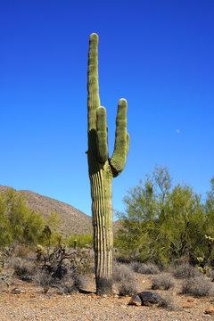 Cactus landscape in the dry Arizona desert near Scottsdale, AZ