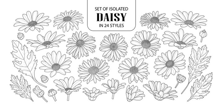 Set of isolated daisy in 24 styles.