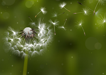 Dandelion Seeds in the Sunlight Blowing Away Across a Defocused Background - Colored Illustration, Vector