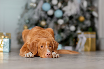 Cute Dog waiting for the New Year