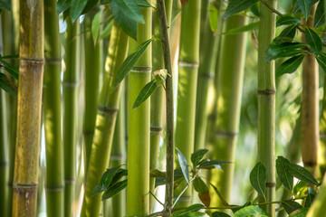 Fotobehang Bamboo Aveiro, Portugal