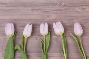 Five pink pastel spring love tulips parallel in row closeup . Beautiful present flowers for valentine's or mother's day, wedding, birthday, easter, girlfriend, wife, sweetheart. Wooden background
