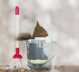 Red squirrel sitting in a bucket with a brush