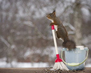 Red squirrel on a bucket with a brush
