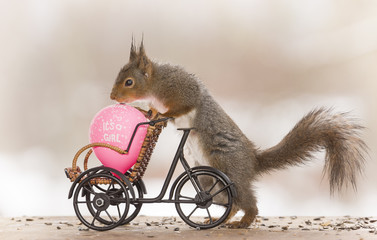 red squirrels with a cycle, balloons and text
