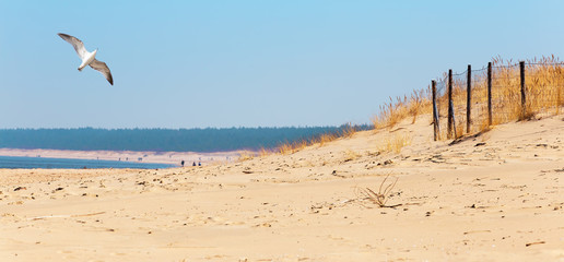 Baltic sea beach, Baltic coast photo. Wall mural