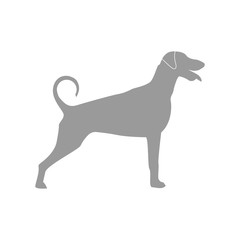 vector illustration: gray dog silhouette on the white background