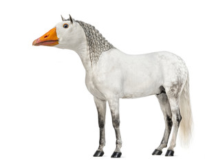 chimera with a Male Andalusian horse and a face of a goose against white background