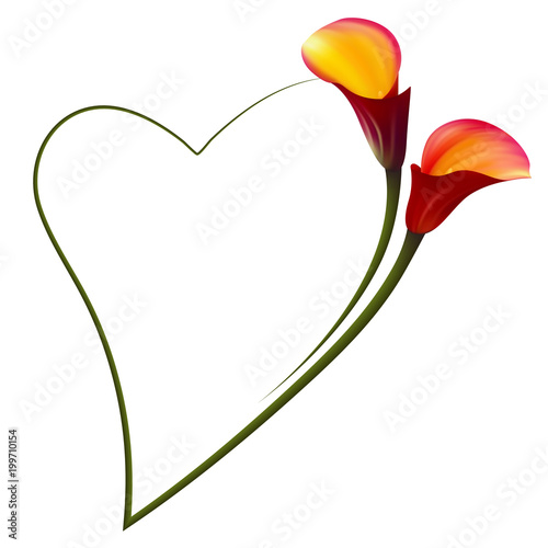Realistic red calla lily romantic frame. The symbol of Attraction ...