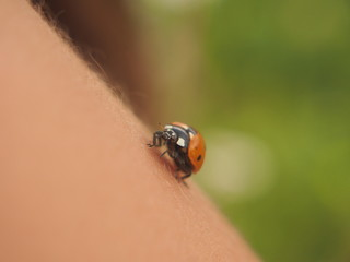 With the hands of man flies a bug ladybug.