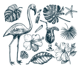 Summer set. Ink hand drawn collection of tropical plants leaves, flowers, seashells, flamingo bird. Botanical and tropical elements for design, Vector illustration.