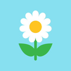 Chamomile flower vector icon in flat style. Daisy illustration on blue isolated background. Camomile sign concept.