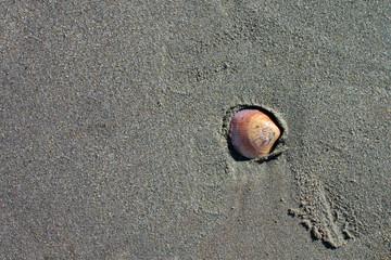 Seashell closeup on sand beach