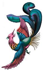 Chinese Phoenix illustration isolated