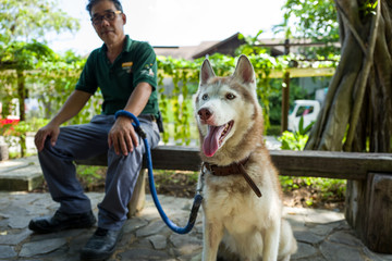A husky on Sentosa Island