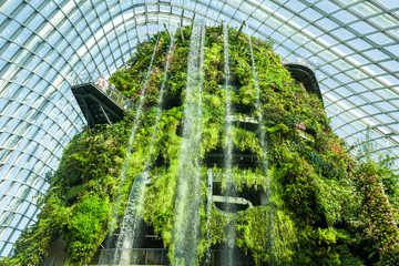 The Cloud Forest in Singapore