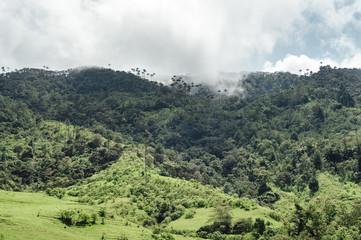 Green landscape of Cocora Valley, Salento, Colombia