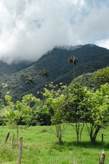Palm trees and hills on a cloudy day in Cocora Valley in Salento, Colombia