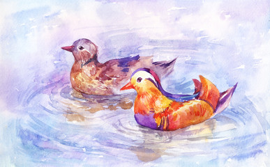 Two mandarin ducks swim on the lake, pair of beautiful birds on the river. Watercolor illustration