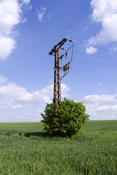 Power Lines: Medium-voltage power line termination pylon at the edge of a growing wheat field in Eastern Thuringia in springtime
