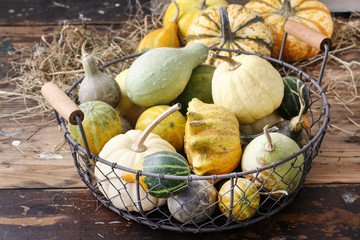 Wire basket with pumpkins.