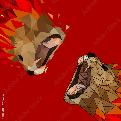 Isolated Low poly colorful lion with white back ground