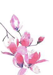 Blooming Magnolia. A branch of a gentle pink magnolia. Watercolor background.