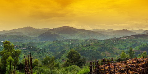 Canvas Prints Honey rwanda, africa