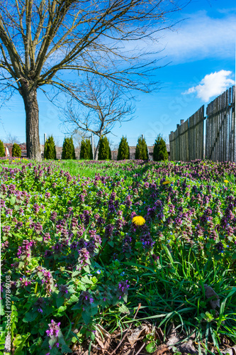 View Of A Meadow With Blooming Spring Flowers A Wooden Or Picket