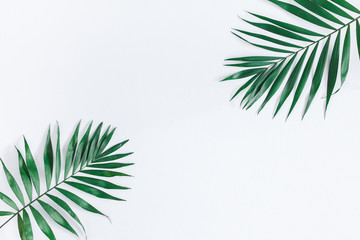 Leaf pattern. Green tropical leaves on gray background. Summer concept. Flat lay, top view, copy space