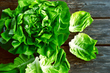 colorful and fresh of Butterhead lettuce with shadow on wooden background