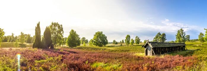 Lüneburger Heide, Heide Blütezeit, Panorama