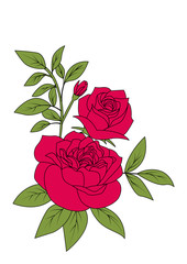 bouquet of red rose, vintage flower style vector illustration on white background
