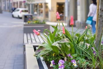 Pflanzkübel in der Einkaufsstrasse einer Stadt