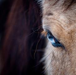 Blue eye of a horse closeup