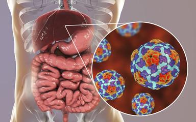 Hepatitis A viruses in liver, 3D illustration