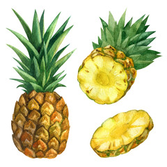 Watercolor illustration. Pineapple, sliced pineapple, half and a piece of pineapple.