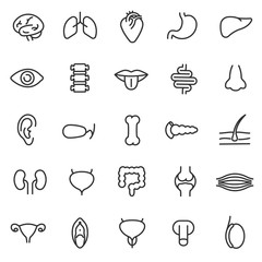 human anatomy icons set. internal organs, body parts linear style. Line with Editable stroke