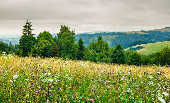 grassy meadow on forested hill